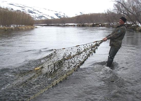 Не лови рыбу сетями — сам в них попадешь!