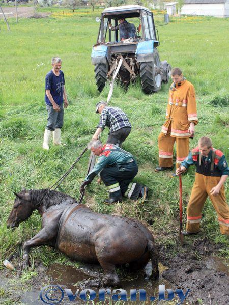 Вороновские спасатели вытащили… лошадь