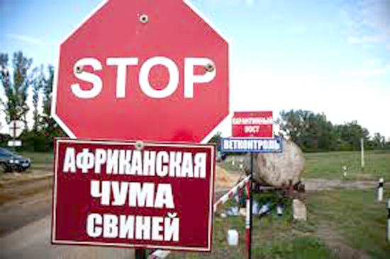 О введении запрета на свободновыгульное содержание свиней