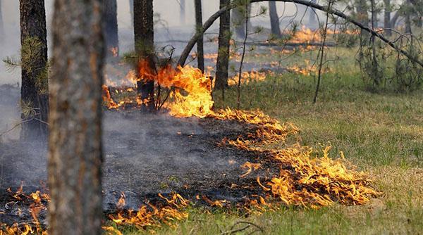 Из-за жаркой погоды в области стали чаще гореть лес и сухая трава
