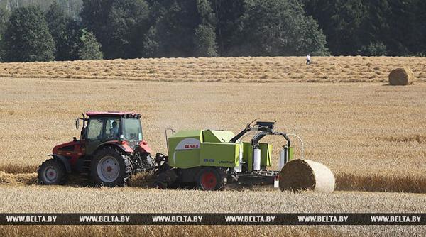 Хозяйства Беларуси намолотили второй миллион тонн зерна