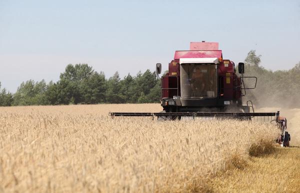 В Гродненской области, по данным на 27 июля, убрано 16 процентов площадей, занятых зерновыми и зернобобовыми культурами