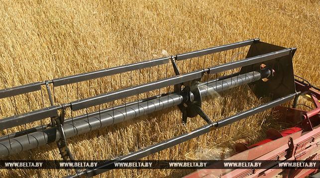 Второй миллион тонн зерна намолочен в Беларуси