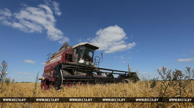 Белорусские аграрии намолотили более 3 млн т зерна