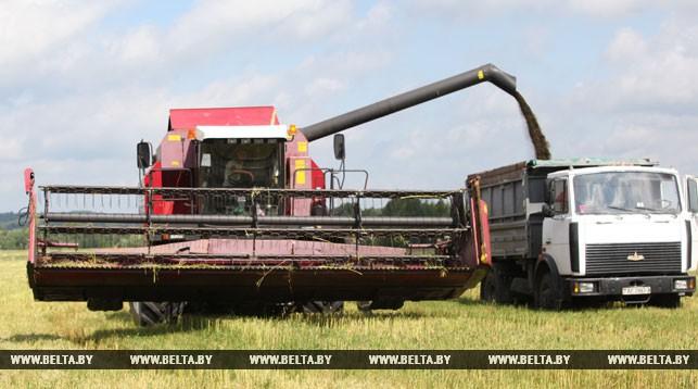 В Беларуси убрано более 90% площадей рапса