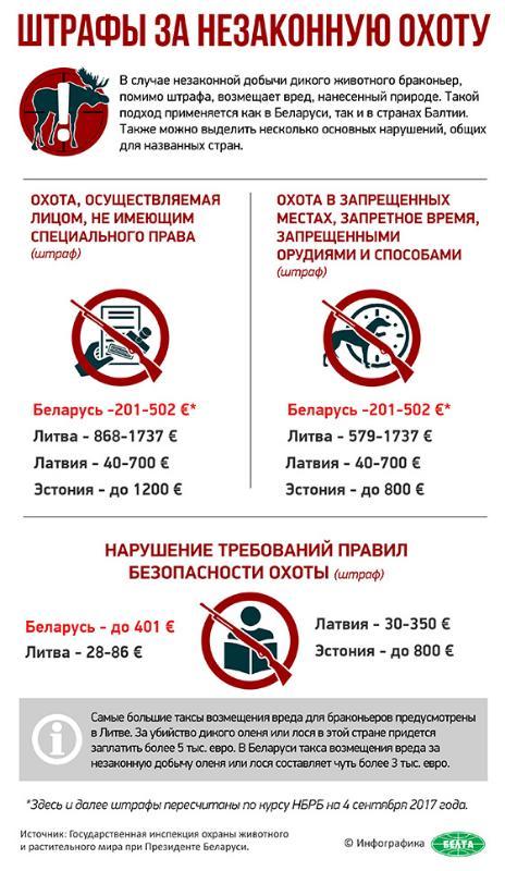 Инфографика: Штрафы за незаконную охоту