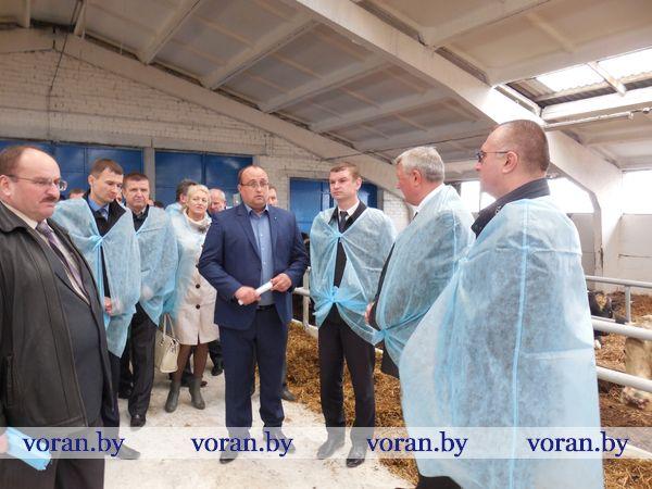 В Вороновском районе проходит областной семинар-совещание по животноводству (Дополнено)