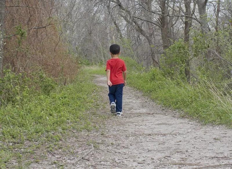 Пятьсот человек ищут 11-летнего мальчика, который заблудился в Беловежской пуще