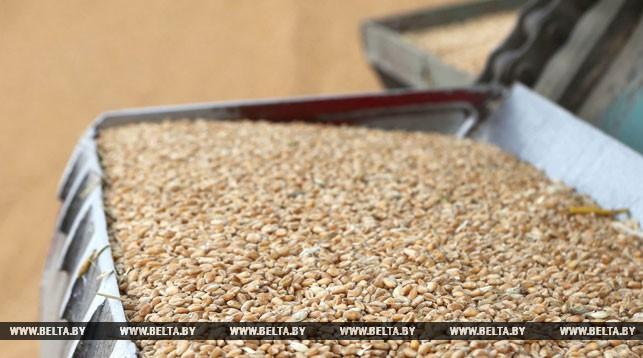 Урожай зерна в Беларуси превысил прошлогодний на 10%