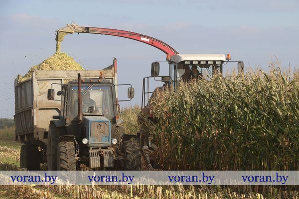 Хроника полевых работ в Вороновском районе