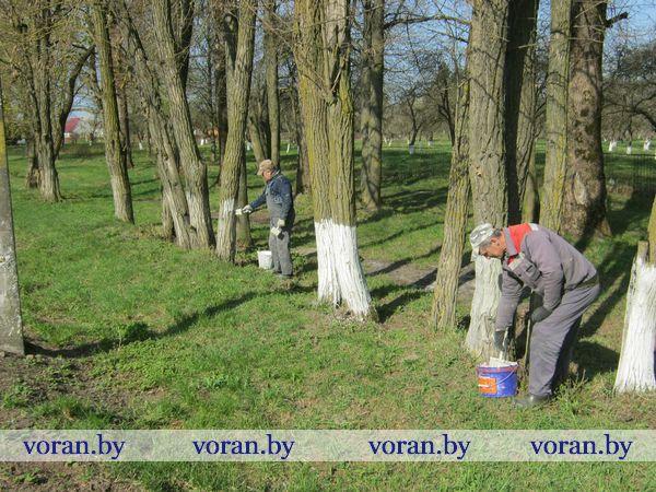 ЖКХ побелка деревьев