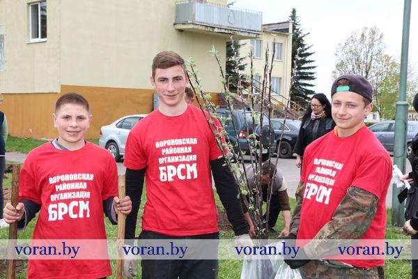 Яблоневые аллеи появились рядом с некоторыми учреждениями образования Вороновщины по случаю предстоящей 100-летней годовщины ВЛКСМ (Фото +Видео)