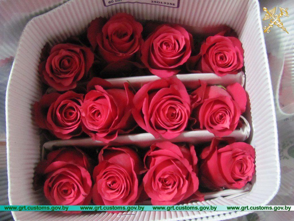«Забыл» задекларировать 30 тысяч свежесрезанных роз