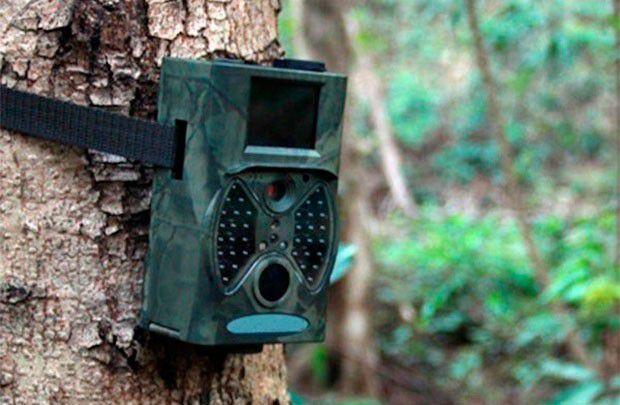 Нарушителей в лесах Беларуси выявляют с помощью камер фотофиксации