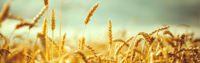 Увеличивается в регионах количество желающих начать агробизнес (Видео)