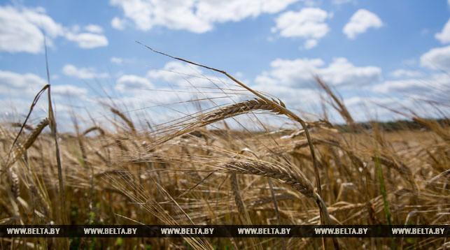 Аграрии рассчитывают собрать в этом году урожай не хуже прошлогоднего — Русый