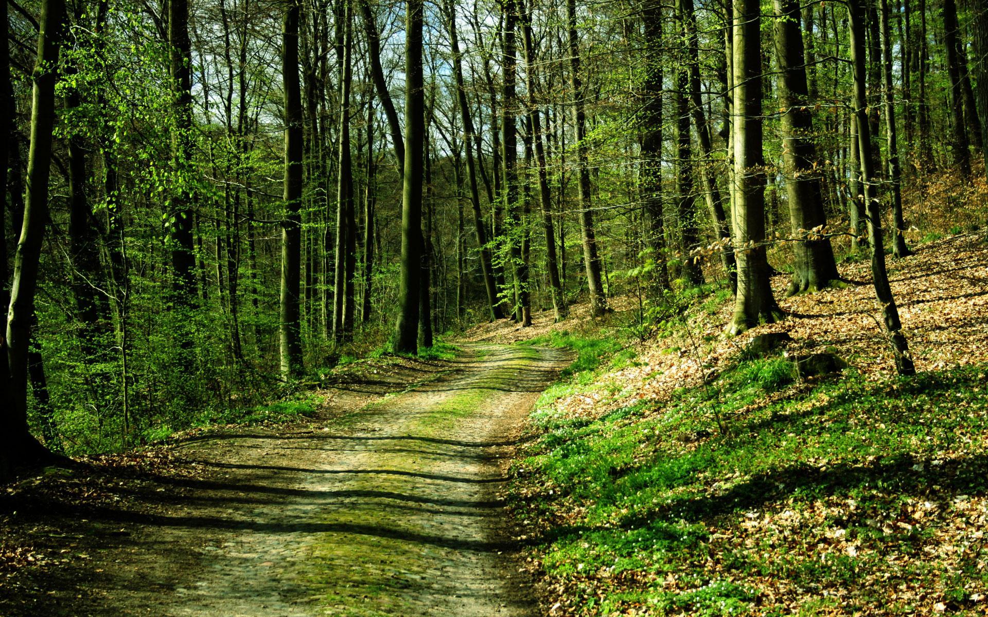 Во всех районах Гродненской области введен запрет на посещение лесов