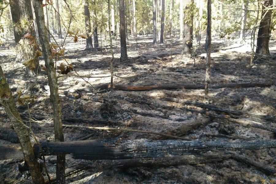 Минлесхоз отвечает на вопросы о запрете на посещение лесов