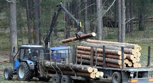 В Беларуси намерены усовершенствовать механизм выдачи разрешений на рубку леса