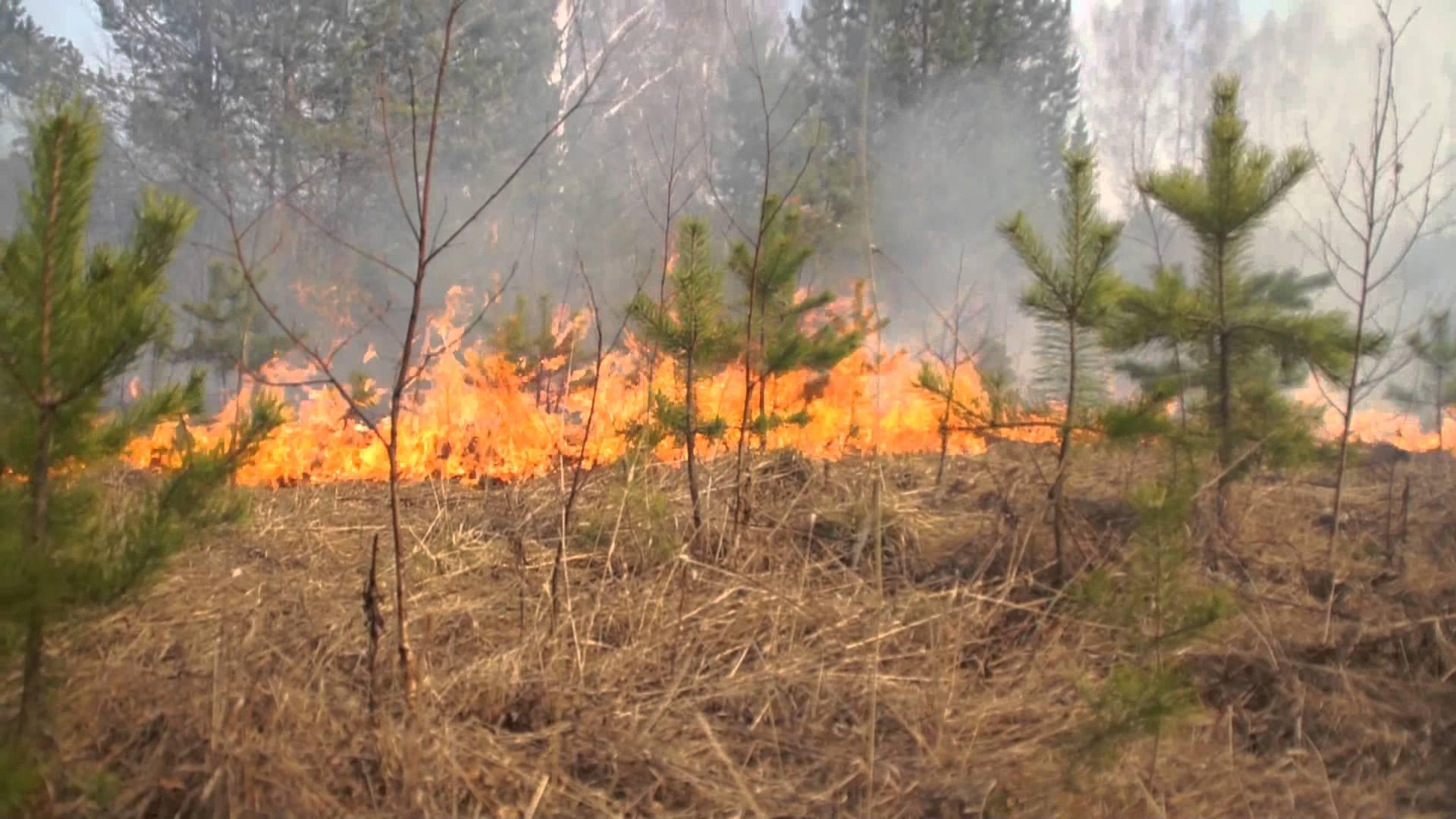 В МЧС рассказали об алгоритме действий при обнаружении лесного пожара