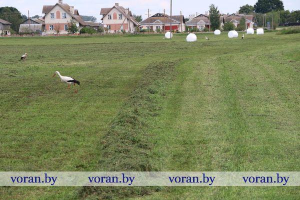 Уборка трав второго укоса в Вороновском районе (Видео)