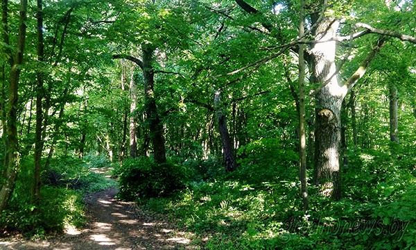Советы для тех, кто отправляется в лес: предупредить родных, телефон в карман, свистки на шею