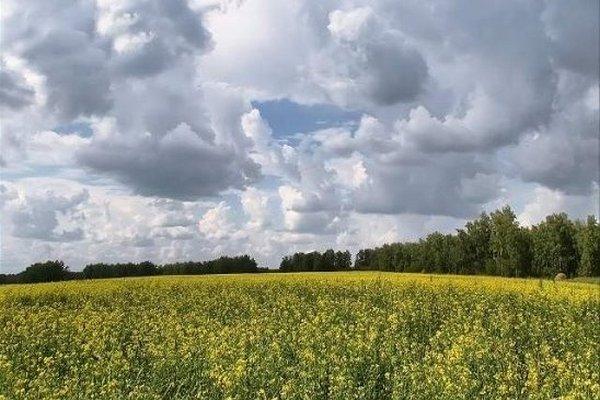 До 28 градусов тепла ожидается по юго-западу Беларуси 5 июля