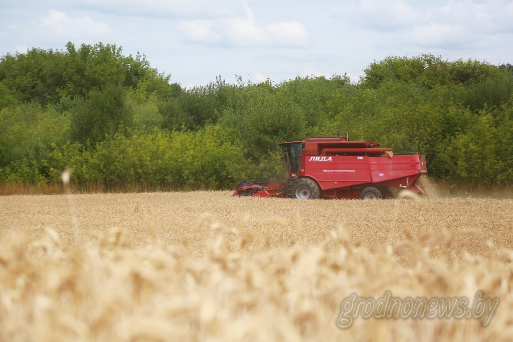 Белорусские аграрии намолотили более 2 миллионов тонн зерна
