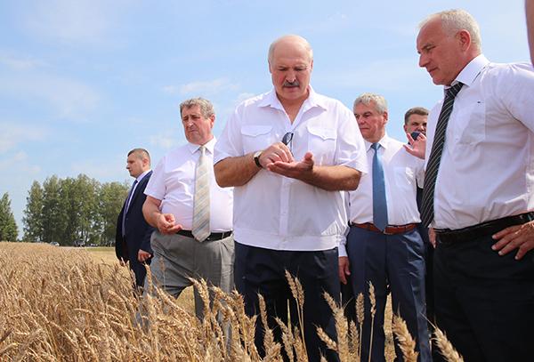 Тема недели: Лукашенко ознакомился с ходом уборочной в регионах