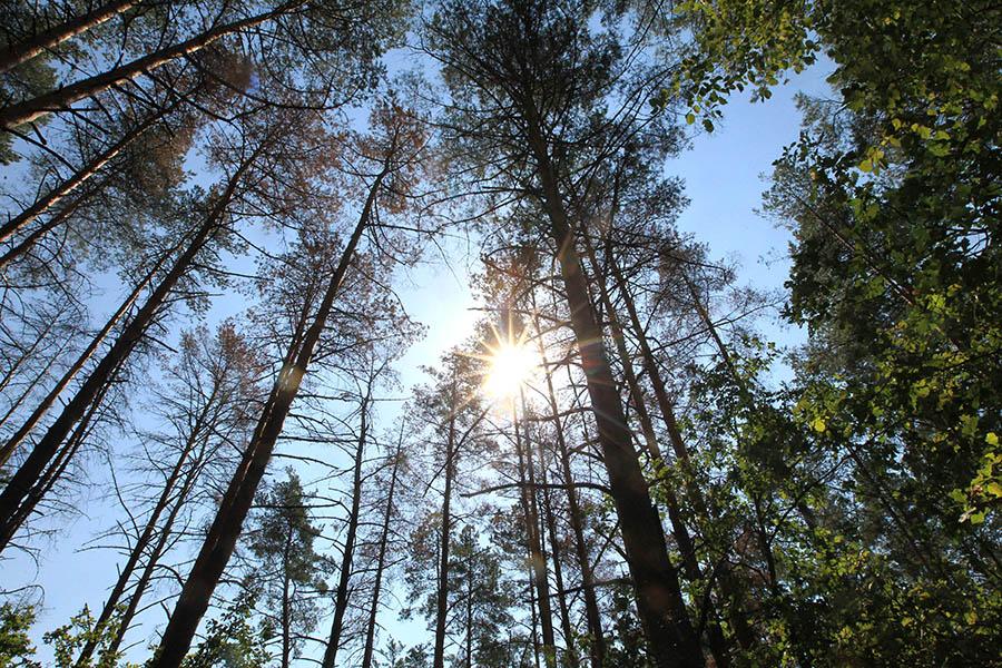 Житель Вороново, заподозрив мужчину в краже, вывез его в лес и оставил там привязанным к дереву