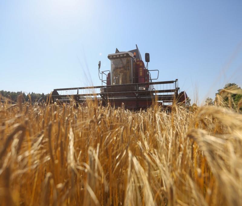 Белорусские аграрии намолотили более 4 миллионов тонн зерна