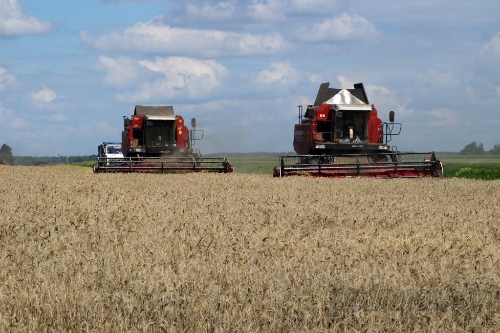 На Гродненщине 167 комбайновых экипажей намолотили по тысяче и более тонн зерна