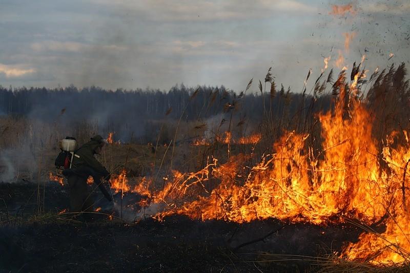 В Лидском районе уже четвертые сутки тушат торфяной пожар