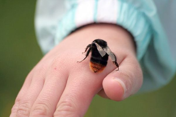 Вороновский РОЧС напоминает: берегитесь укусов насекомых