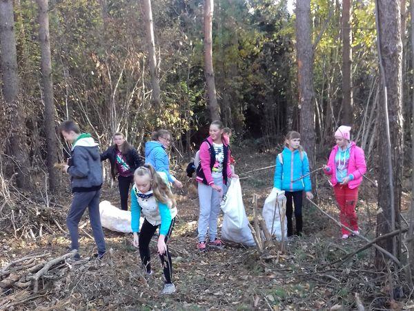 В Вороновском районе леса стали чище