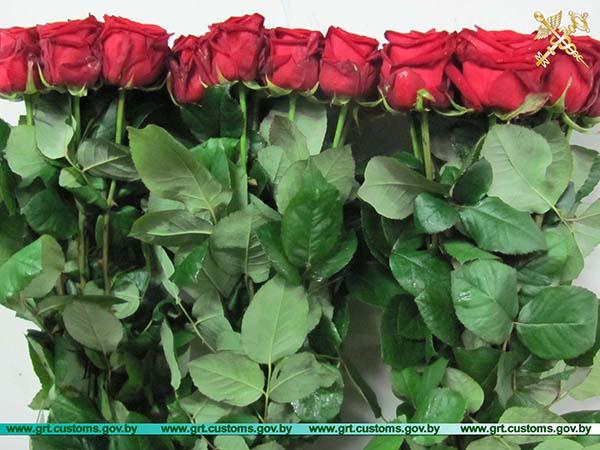 Шесть попыток незаконного перемещения цветов в адрес российских фирм выявлено за неделю в пункте пропуска «Бенякони» гродненскими таможенниками