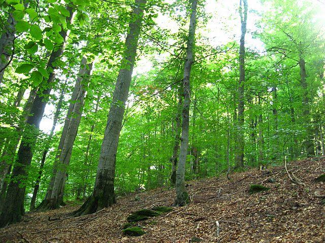 На 3 года осужден житель Вороново, который вывез в лес и привязал к дереву «должника»