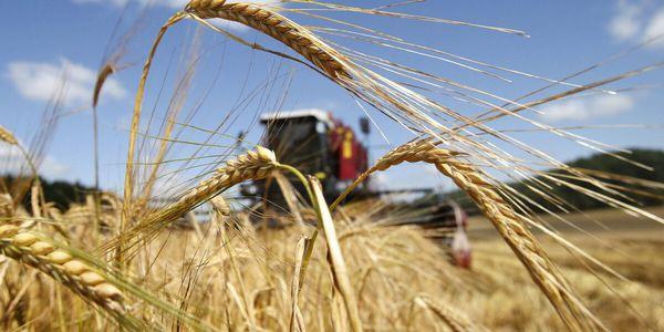 Предварительные итоги сельскохозяйственного года в Вороновском районе