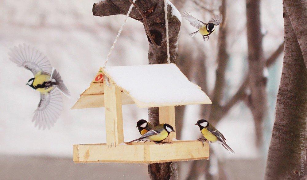 Чем подкормить птиц зимой