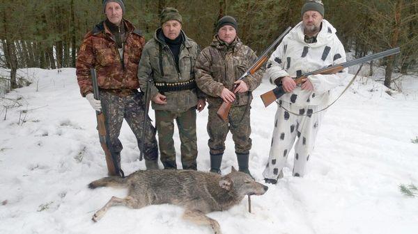 Охота на волков в Вороновском районе