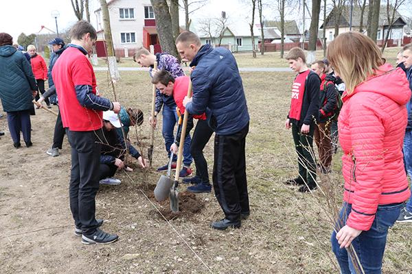 Зазеленеет пусть поселок наш! В Вороново в честь 75-летия Гродненской области посадили декоративные кустарники