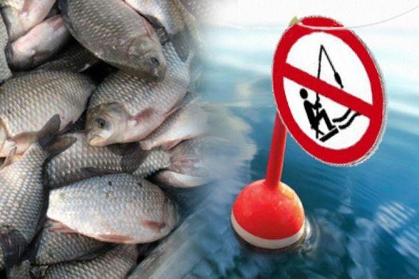 Рыбаки словили «золотую рыбку»  и уголовное дело