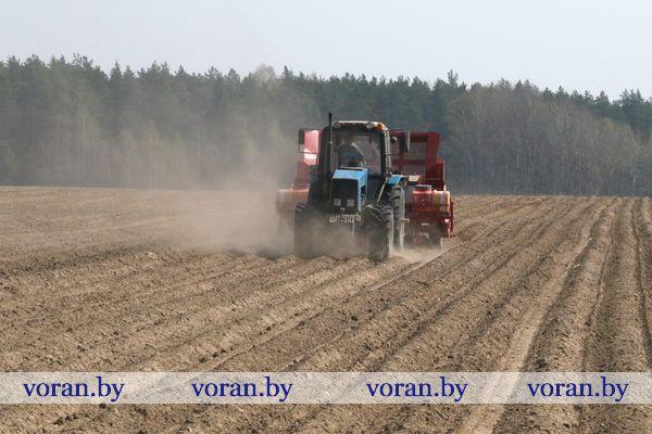 В Вороновском районе подоспела пора картофеля
