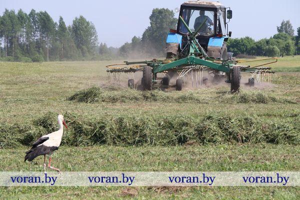 Испытание жарой проходят вороновские аграрии