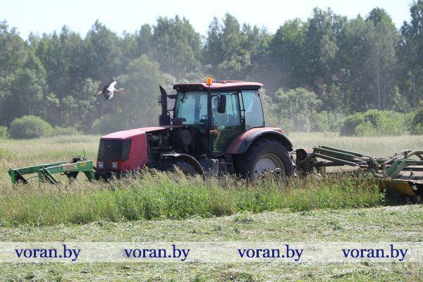 Убрать травы, получить корма высокого качества. В экспериментальной базе «Октябрь» Вороновского района ведется кормозаготовка (Видео)