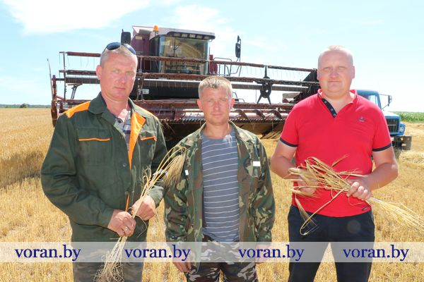 В КСУП «Больтишки» Вороновского района — зажинки. Сельхозпредприятие первым в районе приступило к уборке зерновых.