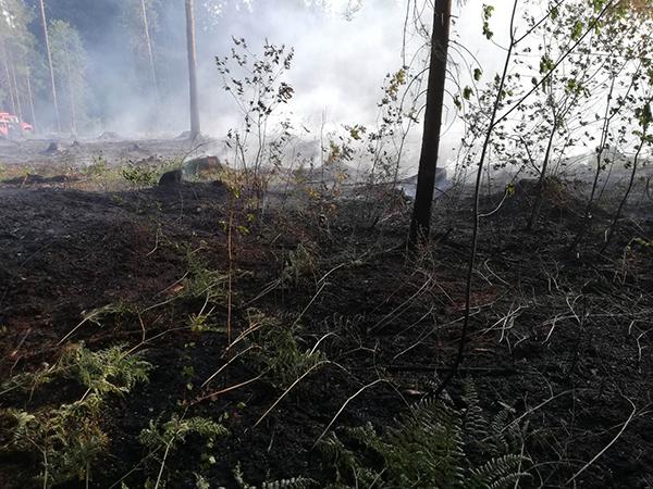 В Вороновском районе горел лес