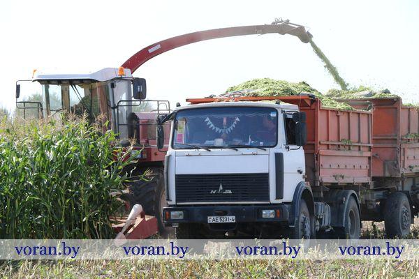 На Вороновщине подоспела  кукуруза
