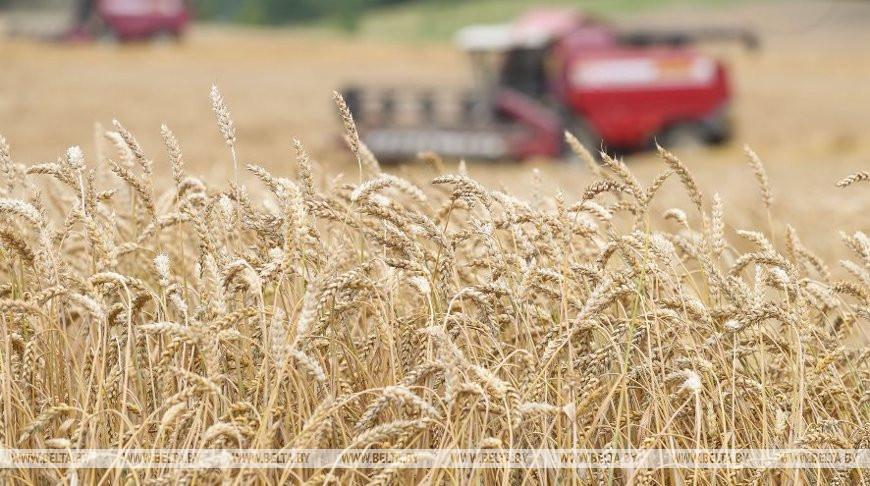 В Беларуси осталось убрать 2,5% площадей зерновых