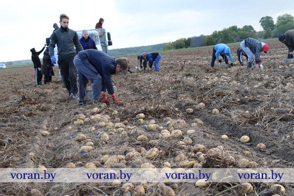 Из аудитории —  на картофельное поле